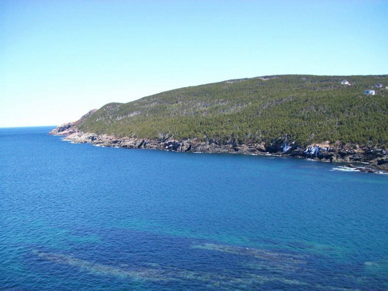 Outer Cove 2009